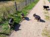 Wildpark-Schorfheide-Ferkel