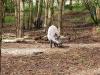 Wildpark-Schorfheide-Wildschweine