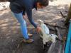 Wildpark-Schorfheide-Ziegen-buersten