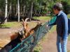 Wildpark-Schorfheide-Ziegen