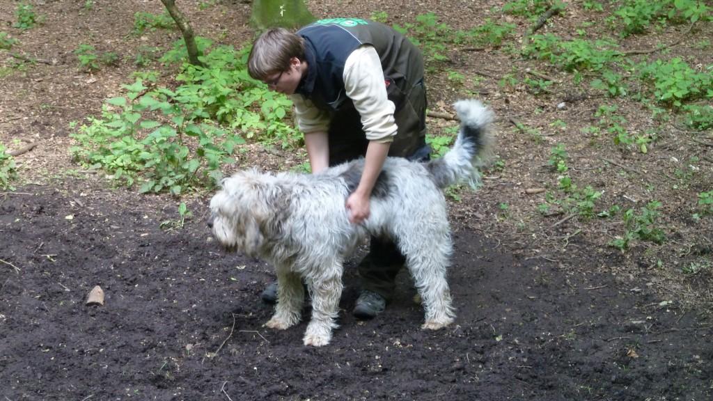 Ein Otterhund wurde früher zur Jagd auf den Otter benutzt