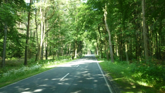 Wir fahren weiter in die Altmark durch herrliche Wälder